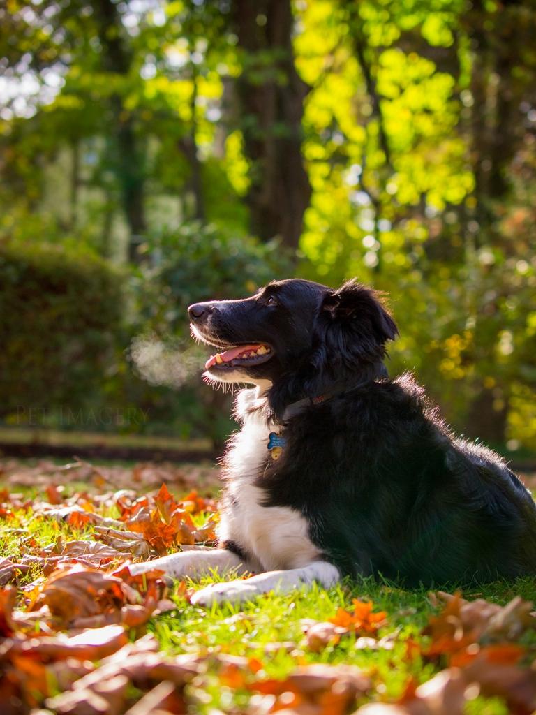 best pet photography dog kaplan