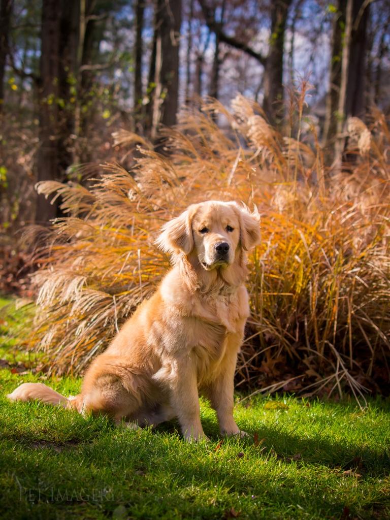 best dog photography kaplan