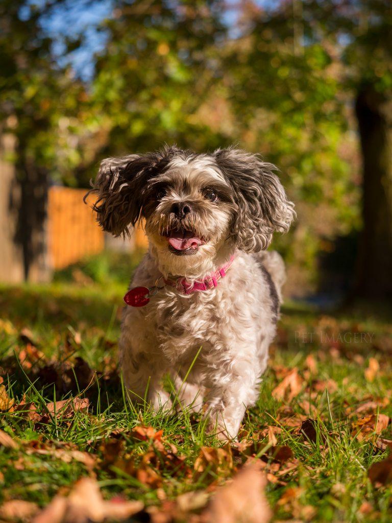 best pet photography pet imagery