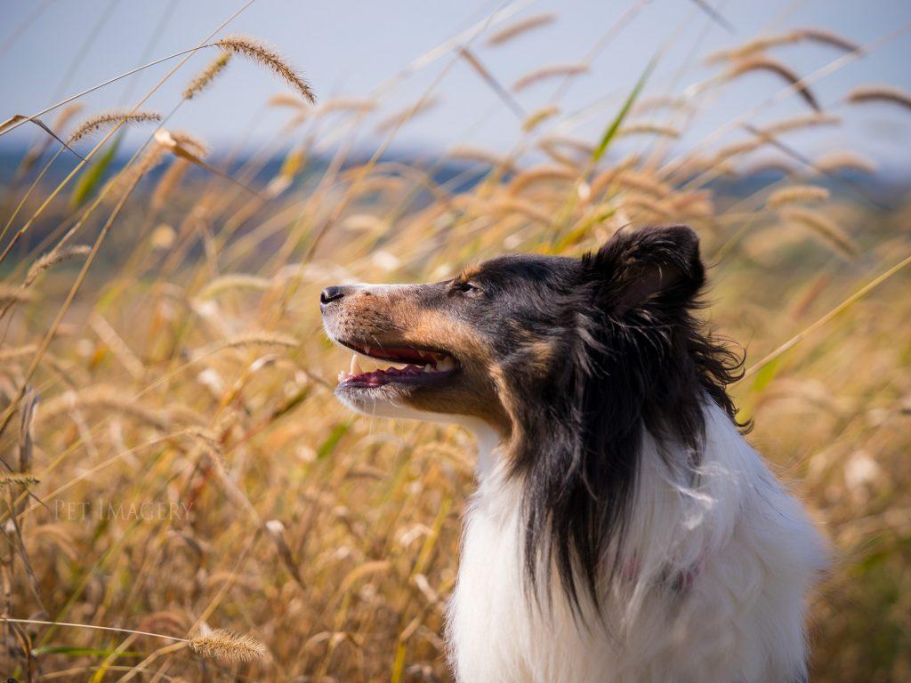 _dog-photography-kaplan
