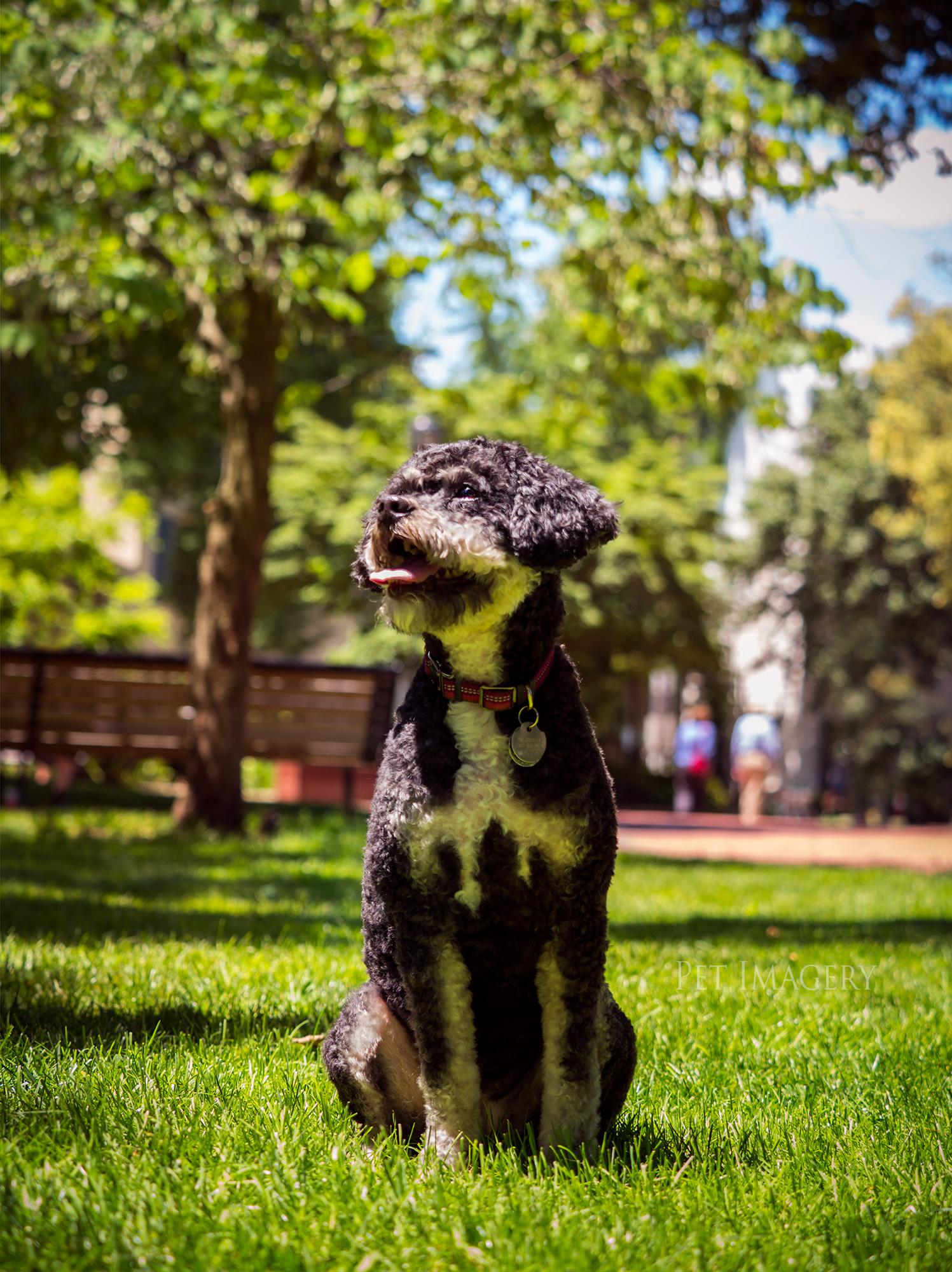 Pet Imagery by Lauren Kaplan
