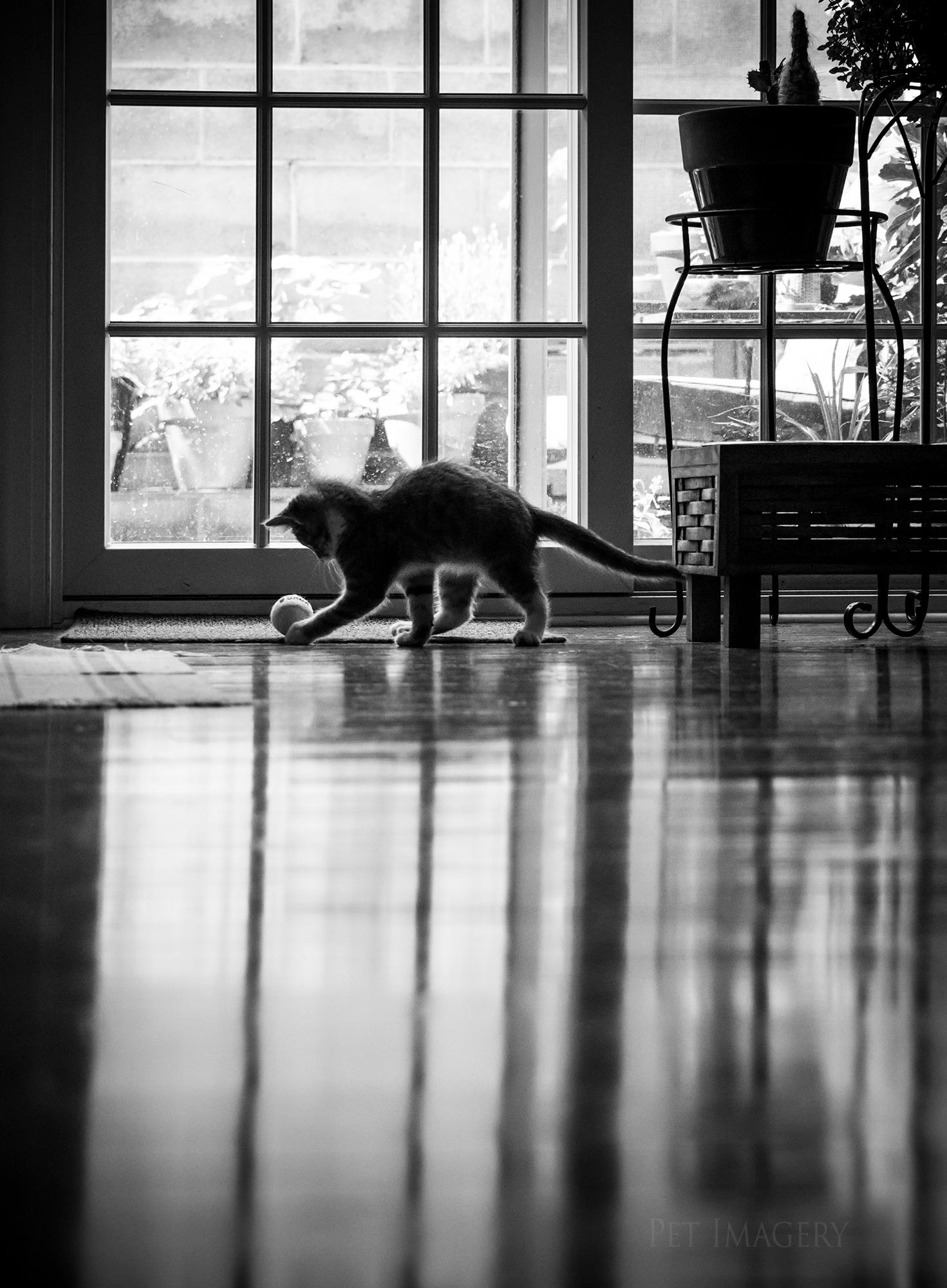 Pet by Lauren Kaplan Photography